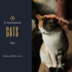 It's International Cat Day