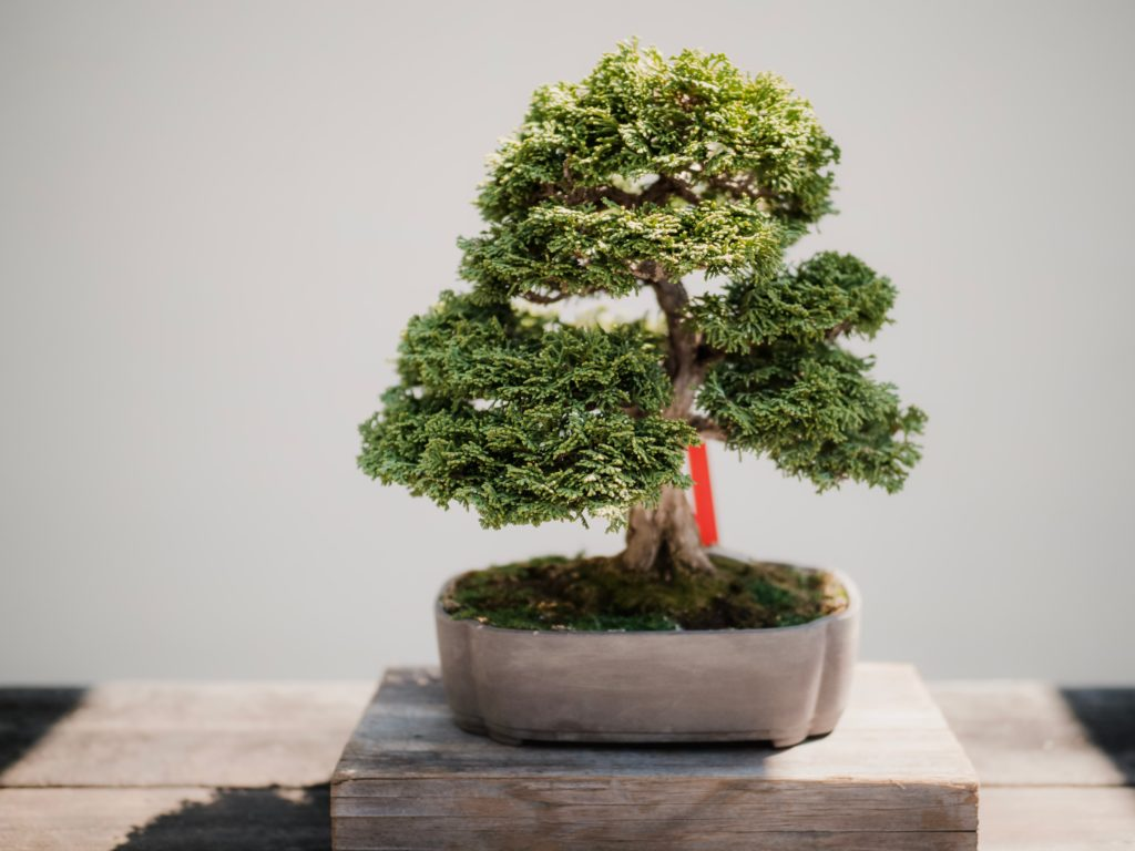 You r decision is a lot like a bonsai tree in that to get to the inner beauty you have to trim away the excess.